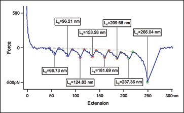 This force-distance curve is an example of force spectroscopy measurements. Here, a protein called titin was unfolded under the force of the atomic force microscope. Each peak corresponds to the unfolding of one domain in the protein.