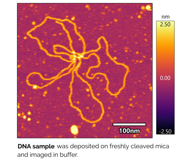 Jupiter Liquid Imaging AFM Image DNA